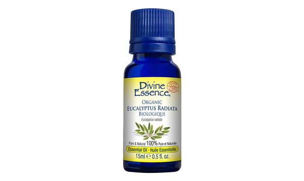 Organic Eucalyptus Radiata